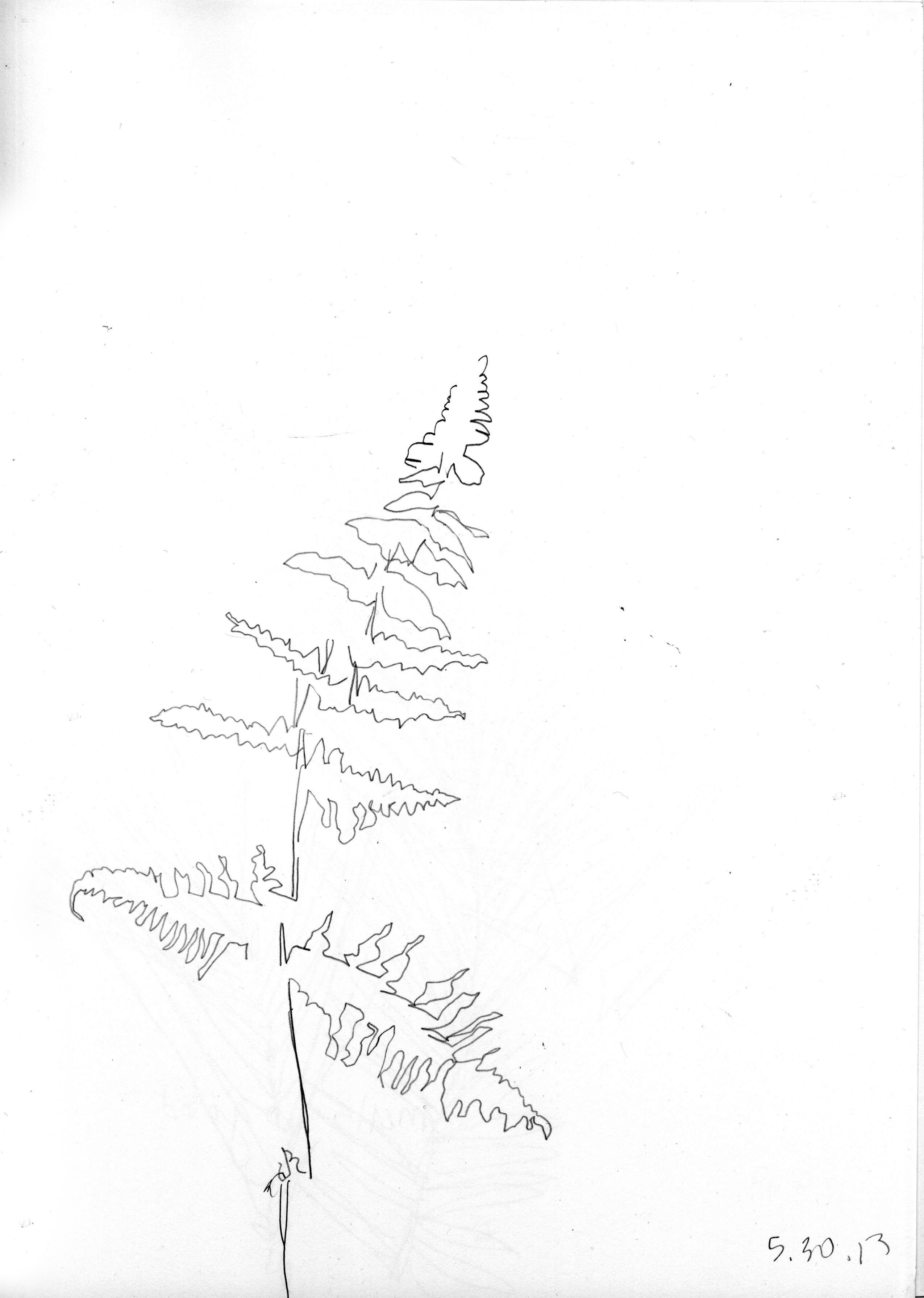 Gibson fern