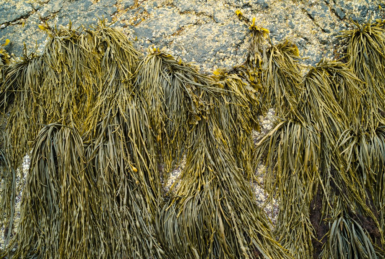 Ash Pt_GRLT_web_062713_M8_Ash Pt_28419_seaweed