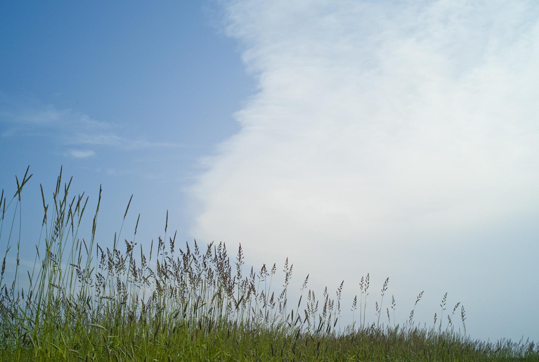 Grass Clouds