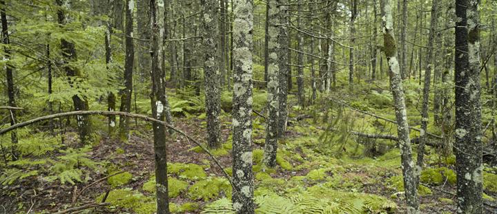 GRLT_091313_M8 Pleasant Pt_29614-15 woods