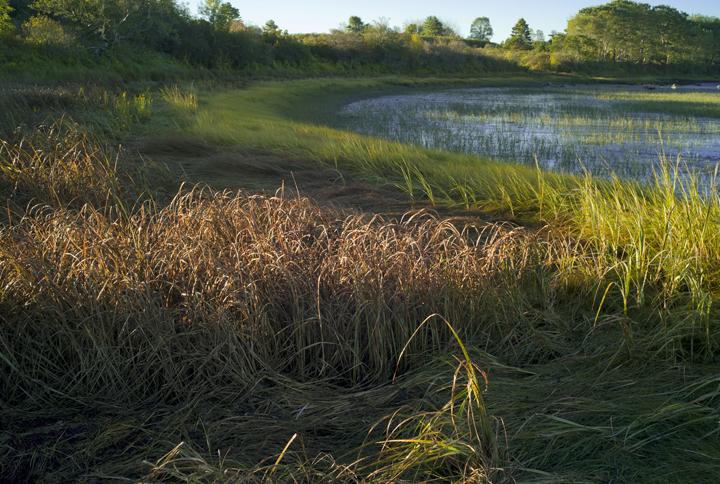 GRLT_091813_Hayfields_30387_spartina-mudflats