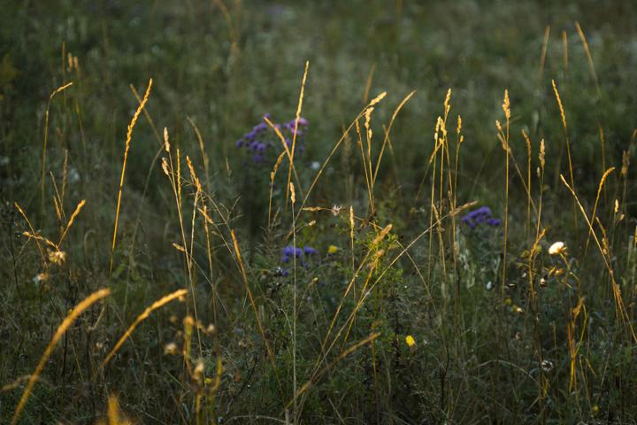 GRLT_091813_Hayfields_4931_grasses-dew