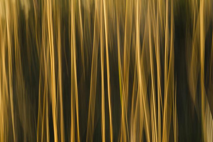 GRLT_091813_Hayfields_4945_grass blur