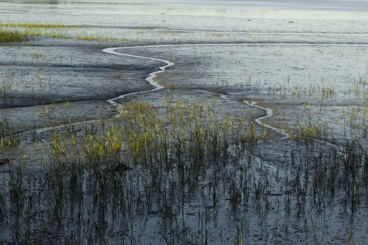 GRLT_091813_Hayfields_4980_mudflats