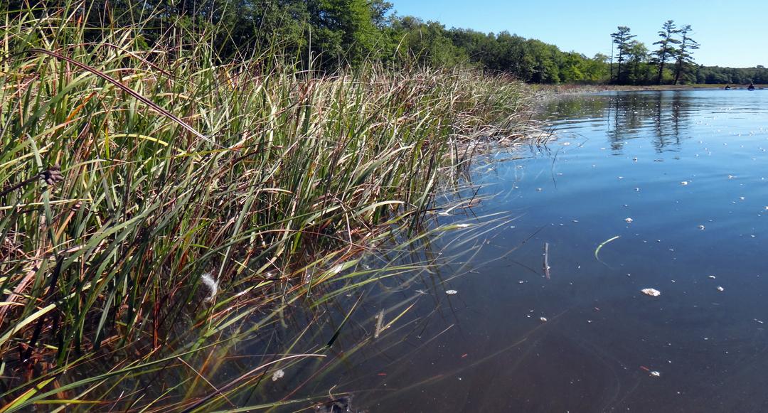 GRLT_091813_TX10_Kayak to Trolley Marsh_marsh-river edge-kayaks_DSC06504