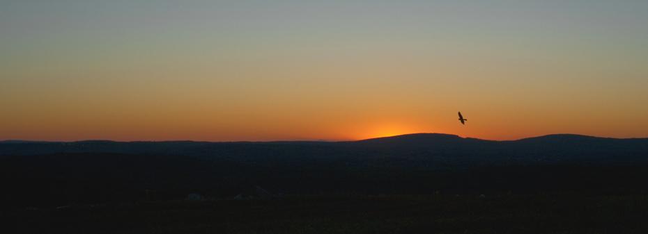 GRLT_091813__T2i_Pittman_ sunset_marsh hawk crop_30470