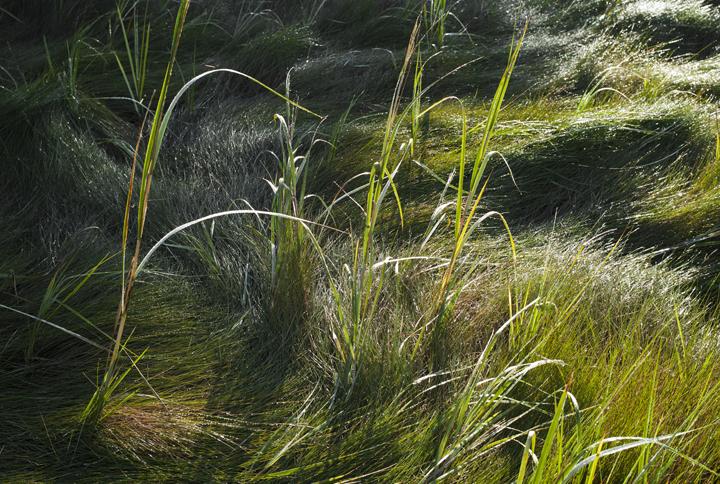 GRLT_Salt Pond_30581 Salt Pond-marsh grass
