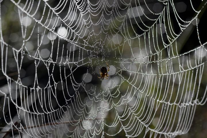 GRLT_Salt Pond_5084_spider