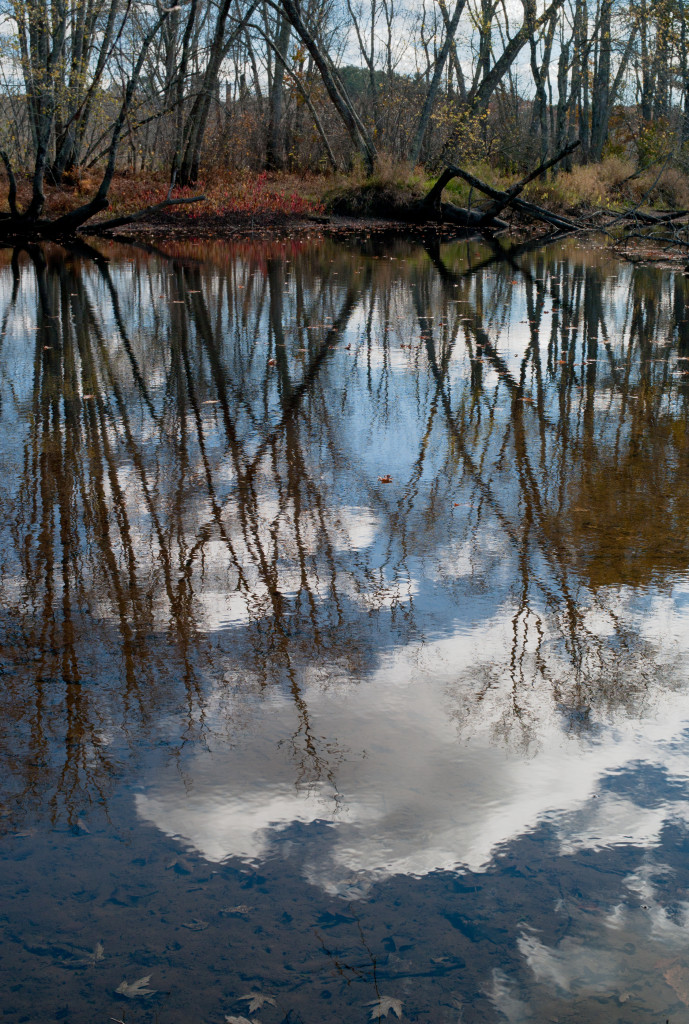 GRLT_M8_102413_Eagles Way_32285_tree reflect