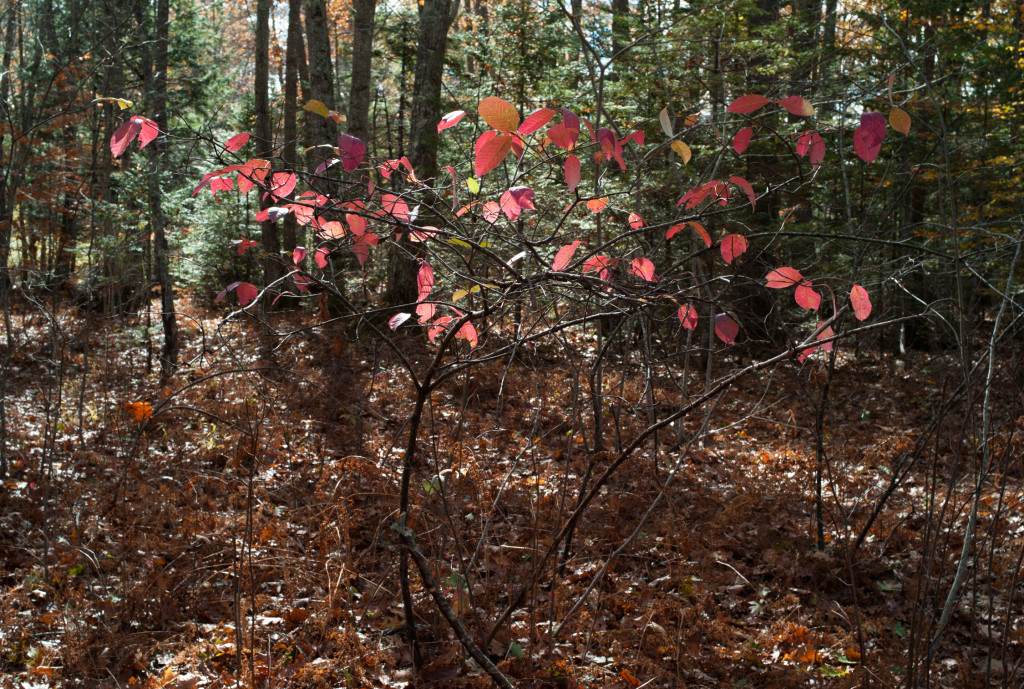 GRLT_M8_102413_Eagles Way_32318_red leaves-woods