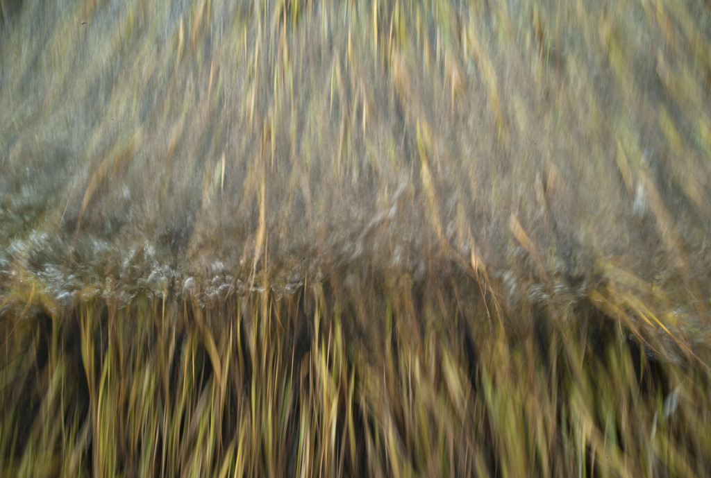 GRLT_M8_102413_Hayfields_32367_spartina-waves